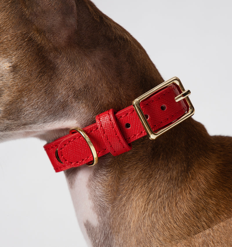 Classic Red Leather Collar