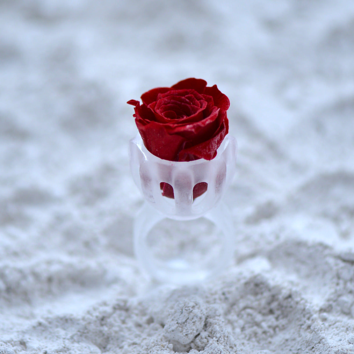 Glass Casting Ring with a Stabilized Rose