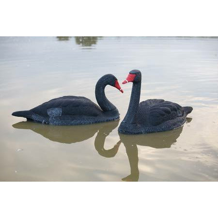 OUTDOOR OUTFITTERS DECOY BLACK SWAN 2PK: 34""