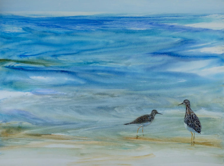 Shorebird Blues: Two for Peace and Harmony