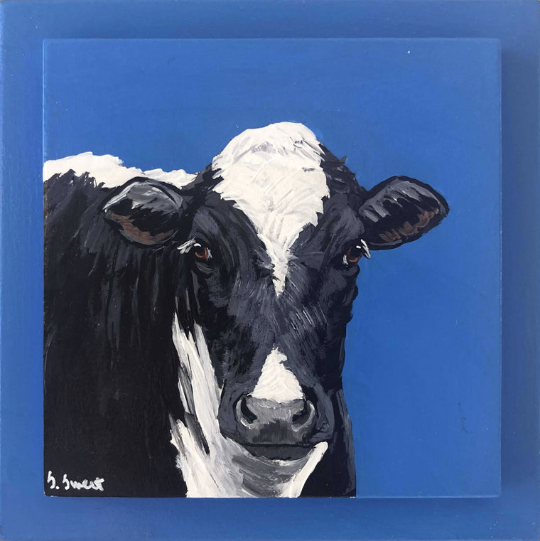 Holstein on blue