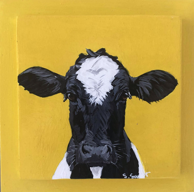 Holstein on yellow