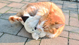 Cat playing with plush cat-face shaped toy