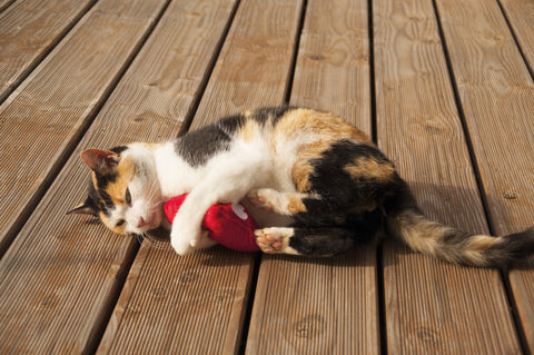 Cat playing with plush valerian heart-shaped cat toy