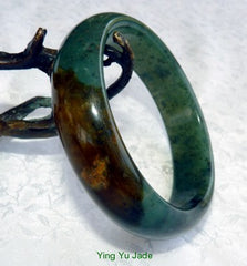 Deep Green and Honey Brown Chinese Jade Bangle Bracelet 60mm (NJ2560)