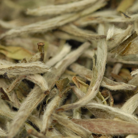 Buy Silver Needle Online White Tea | Tea Blendz