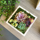 Beautiful Succulents Arrangement