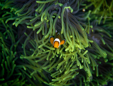 Sigma Photographer uses Outex for FP digital camera underwater 4