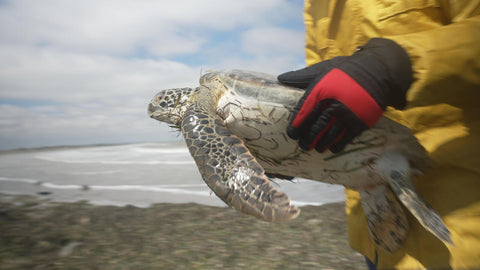 South Padre Island Turtle Cold Stun with Ben Lowy & Marvi Lacar using Outex waterproof case for FX3 cameras 4