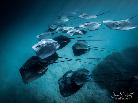 Great Barrier Reef Photographer Joeva Dachelet Sells Underwater Prints at Resorts, Boutiques, and Online