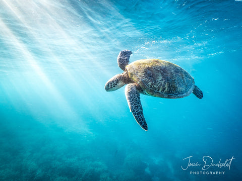 Great Barrier Reef Photographer Joeva Dachelet Sells Underwater Prints at Resorts, Boutiques, and Online 2