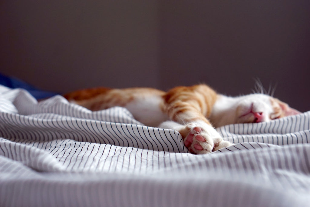 orange and white cat taking a nap on a white mattress