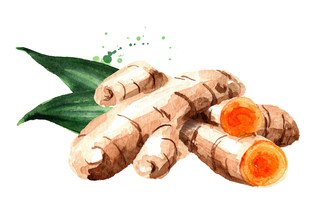 illustration of a turmeric root