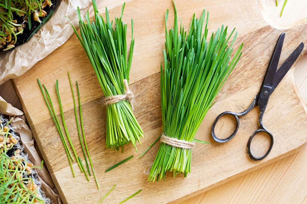 wheatgrass bundles on wooden chopping board with scissors