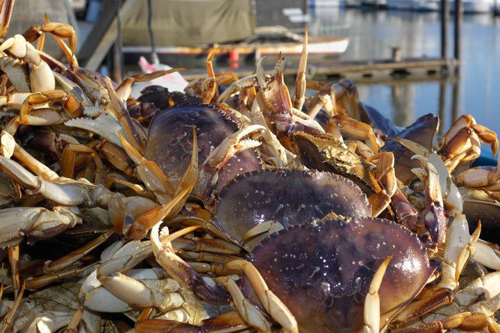 Dungeness Crab Season Delay Lifted
