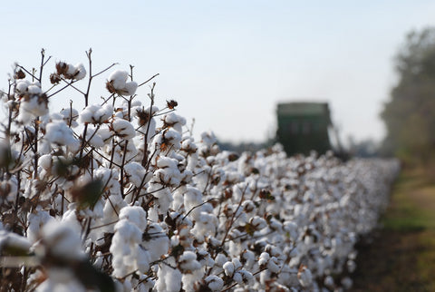 Harvesting Cotton for use in Ravenox Rope