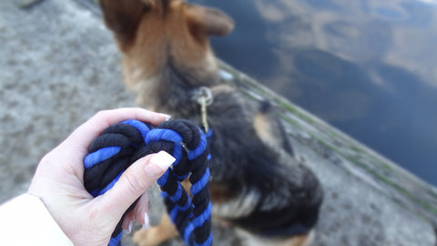 Dog_Toy_Tug_Leash_Rope_Cord_Cordage_Play_Shop_Puppy