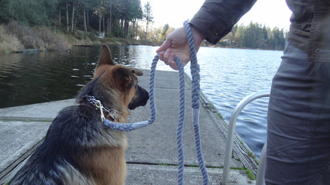 Ravenox_Dog_Toy_Tug_Leash_Rope_Cord_Cordage_Play_Shop_Puppy