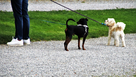 Different Types of Dog Leashes - Rope Dog Leashes for Small Dogs