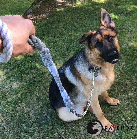 How to buy the perfect dog leash online - Ravenox Chain Dog Leash