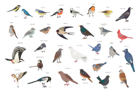 Different types of common garden birds including a Sparrow and a Starling.