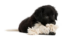 Ravenox_Cotton Rope_Puppy_Toy_01