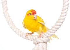 Ravenox_Cotton_Rope_White_with_Bird_Toy