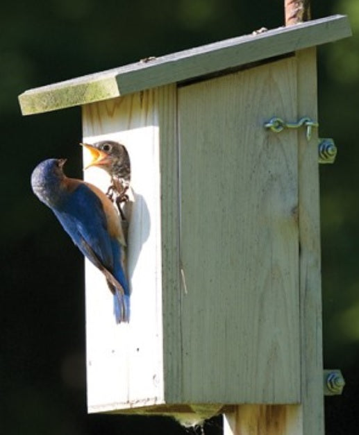 Western Red Cedar Bluebird House