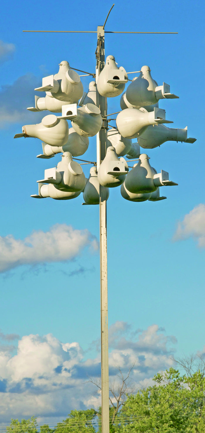 I-Super-Deluxe Purple Martin Gourd Rack System