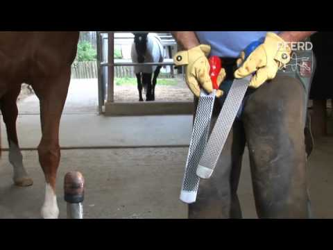Hoof plane use video