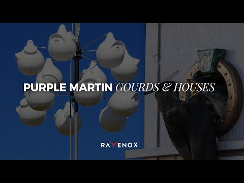 Ravenox Purple Martin Bird Housing | Deluxe 12 Gourd Rack Combo Kit