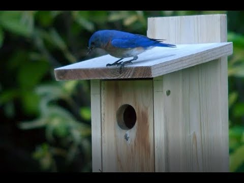 Sparrow Resistant Poly-Tuff Bluebird House