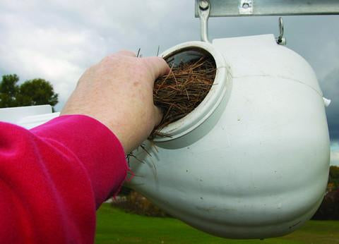 Pine Needles for Purple Martin Bedding
