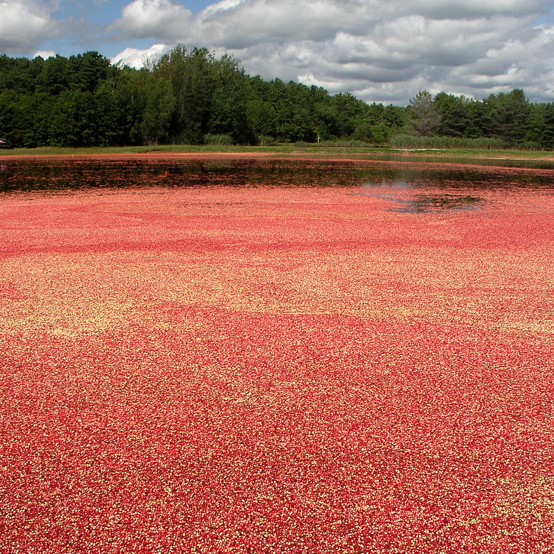 "Ocean Spray will spend $10M to ""prove"" that cranberry juice might help with UTIs"