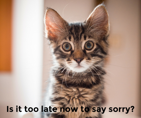 Is it too late to say sorry cat meme