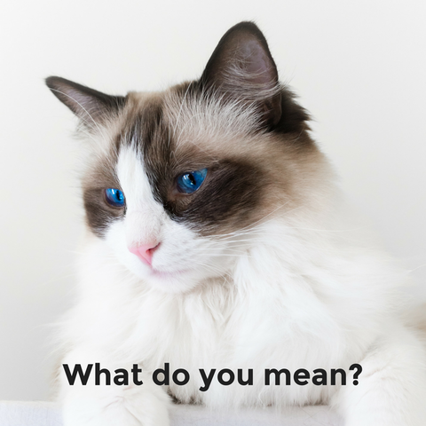 What do you mean cat meme
