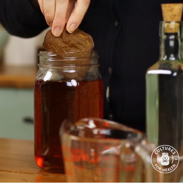 How to Make Kombucha - Dehydrated Scoby
