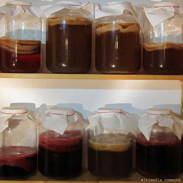 How to Make Kombucha - Kombucha Brew Safe Storage in Pantry