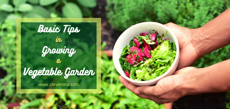 Basic Tips in Growing A Vegetable Garden