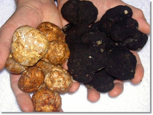 black and white truffles