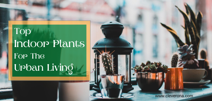 Top Indoor Plants For The Urban Living