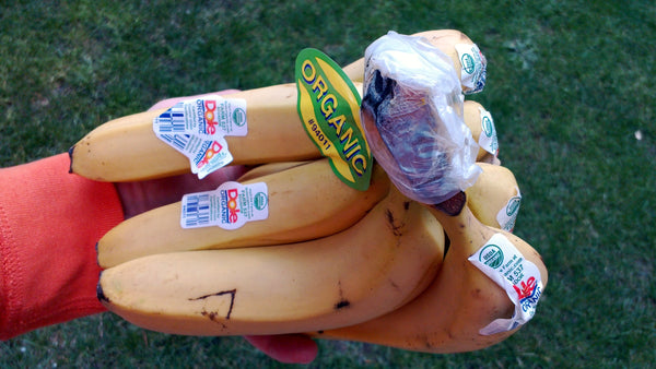 banana stems wrapped in plastic
