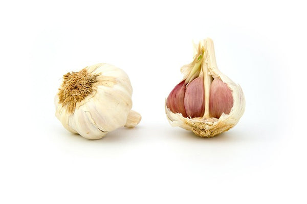 seasonal produce garlic
