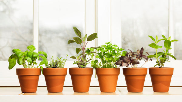 Plant Small Pots of Herbs