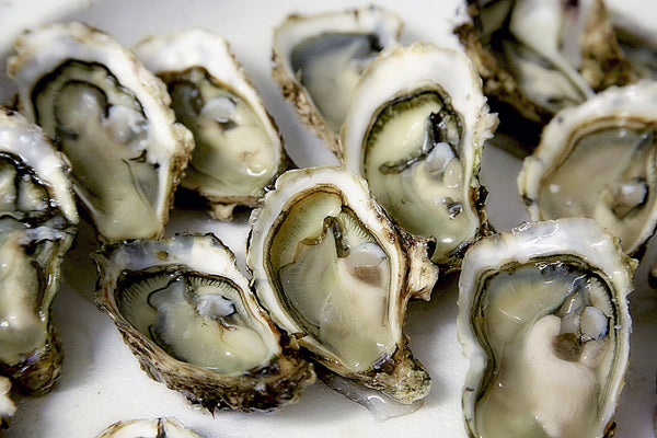 open oysters