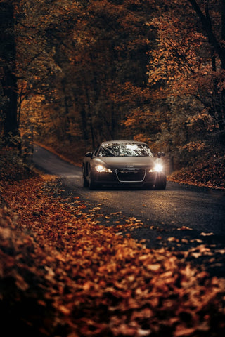 autumn driving