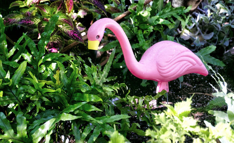 Pink plastic lawn flamingo, photo by Linnaea Mallet