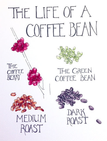 The Life of a Coffee Bean Art Print
