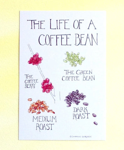 Watercolor Coffee Bean Postcard
