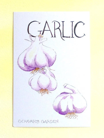 Watercolor Garlic Postcards